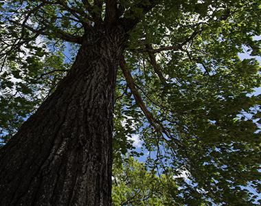 国産すのこベッド原木